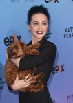 "Screening Of EPIX's ""Katy Perry: The Prismatic World Tour"" - Arrivals"